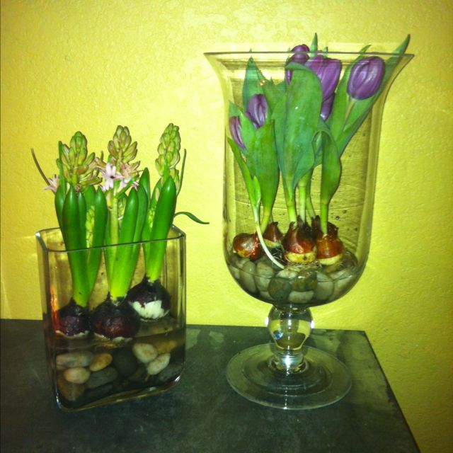 DIY... Tulips In A Bed Of Rocks. Take A Pot Of Tulips