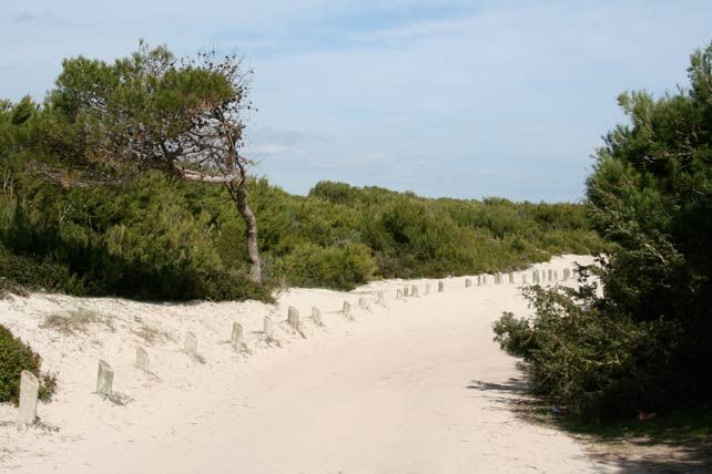 Famous Muro sand dunes in Mallorca (With images)   Beach ... on Dune Outdoor Living  id=44230
