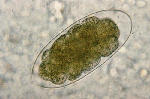 paraziți de alge hpv impfung rki jungen