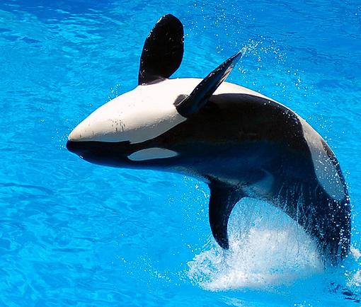 killer whales :)