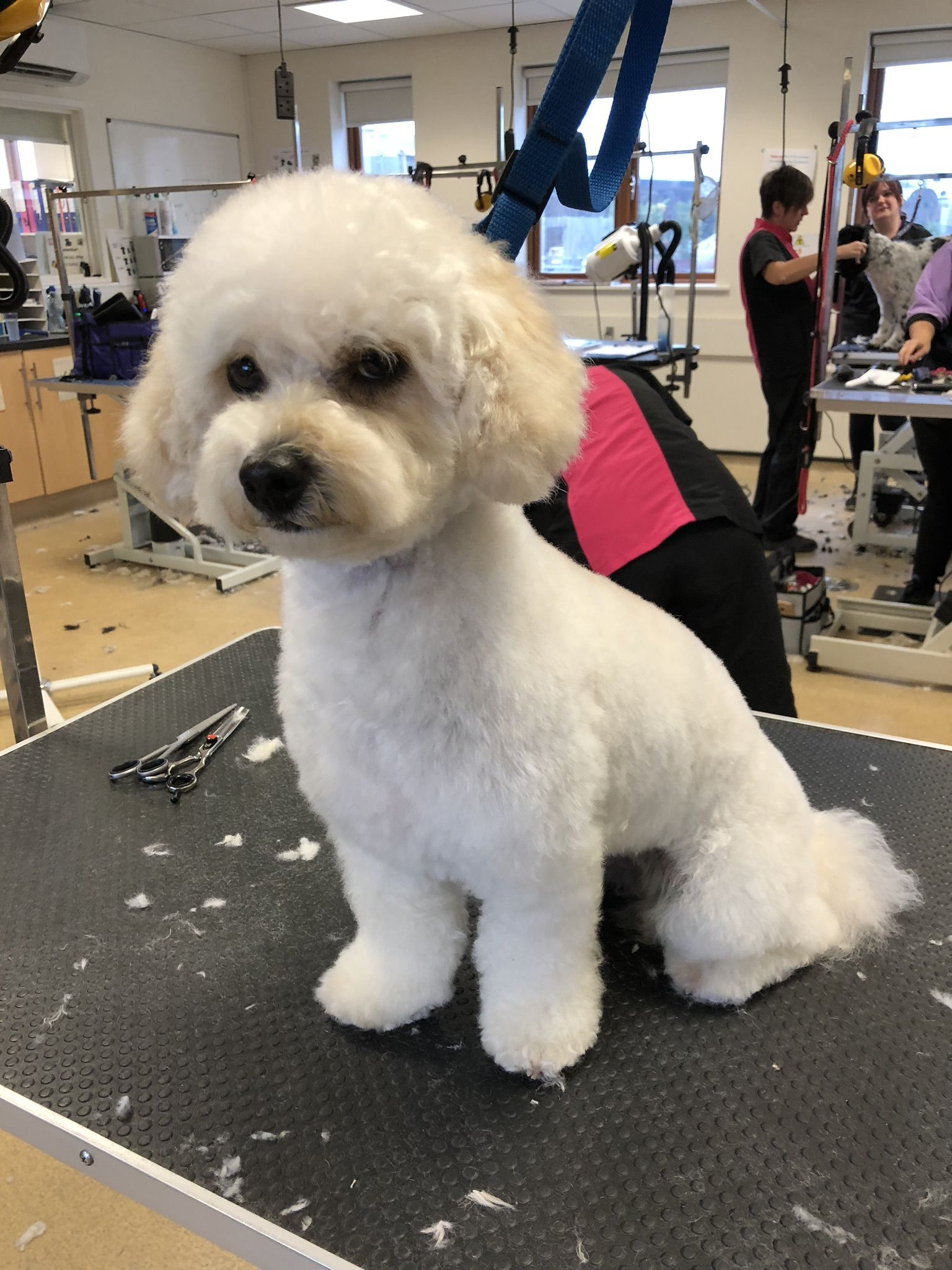 Pin by BB's Pet Boutique on Dog grooming Dogs, Dog