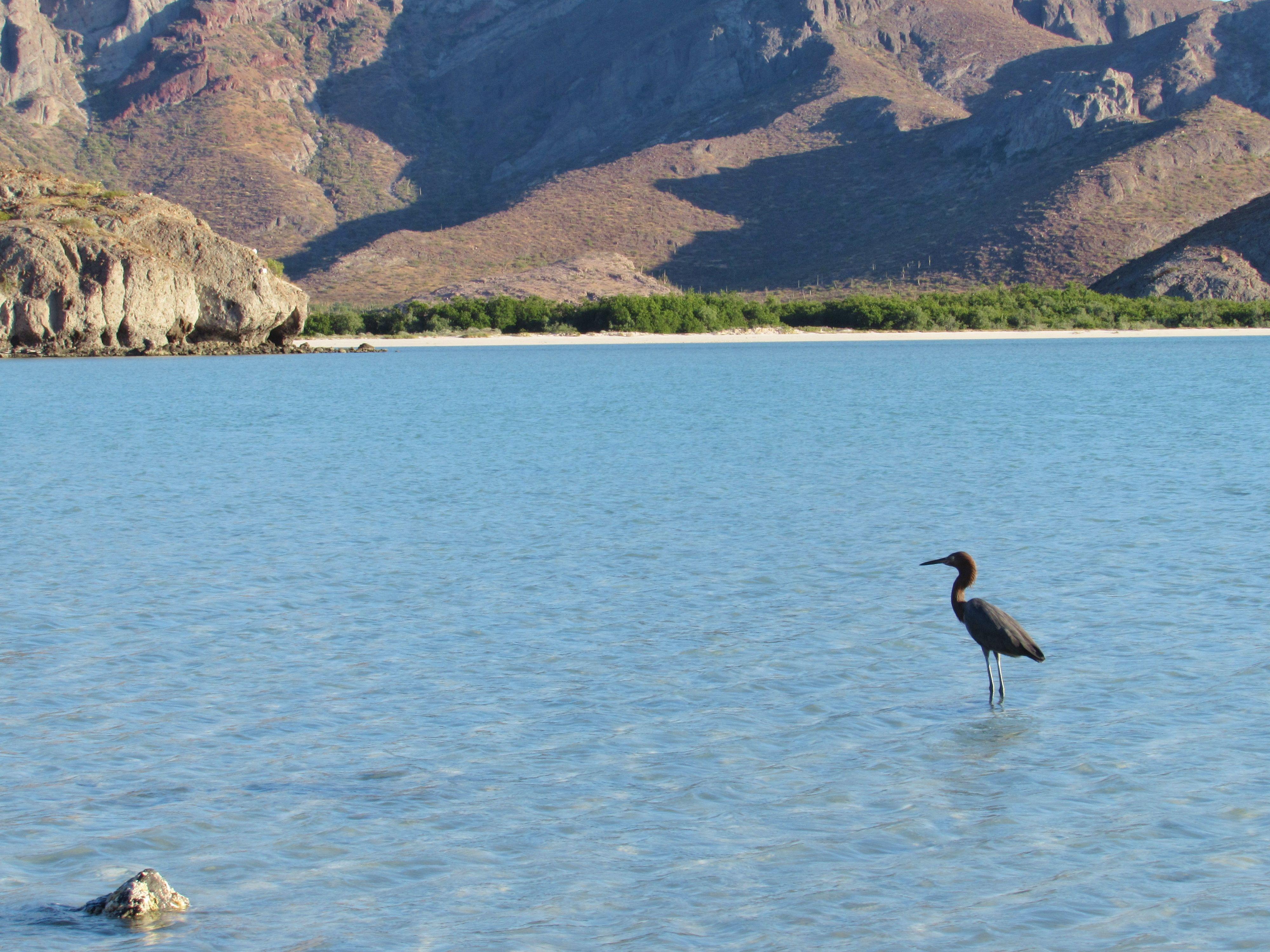 Balandra Beach, La Paz, BCS. México. http://voyagerbug.blogspot.mx