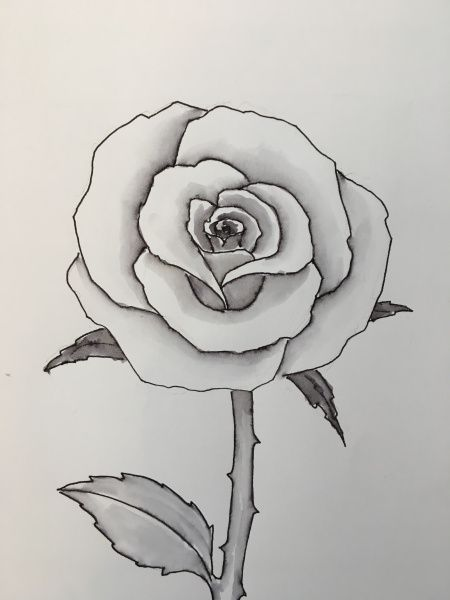 Rose Drawing Images : drawing, images, Rose., Flower, Drawings,, Drawing,, Drawing, Simple