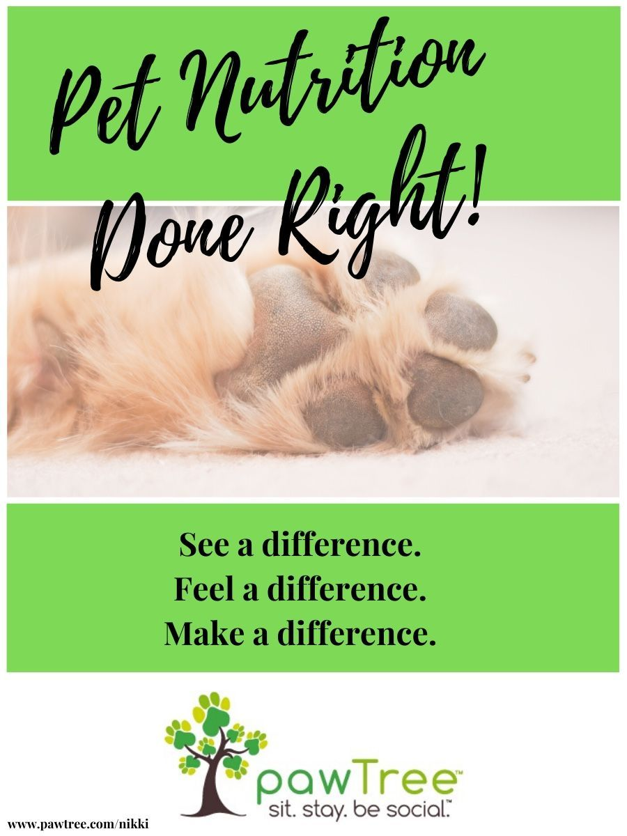 All Natural And Holistic Dog And Cat Food Stop The Allergies And