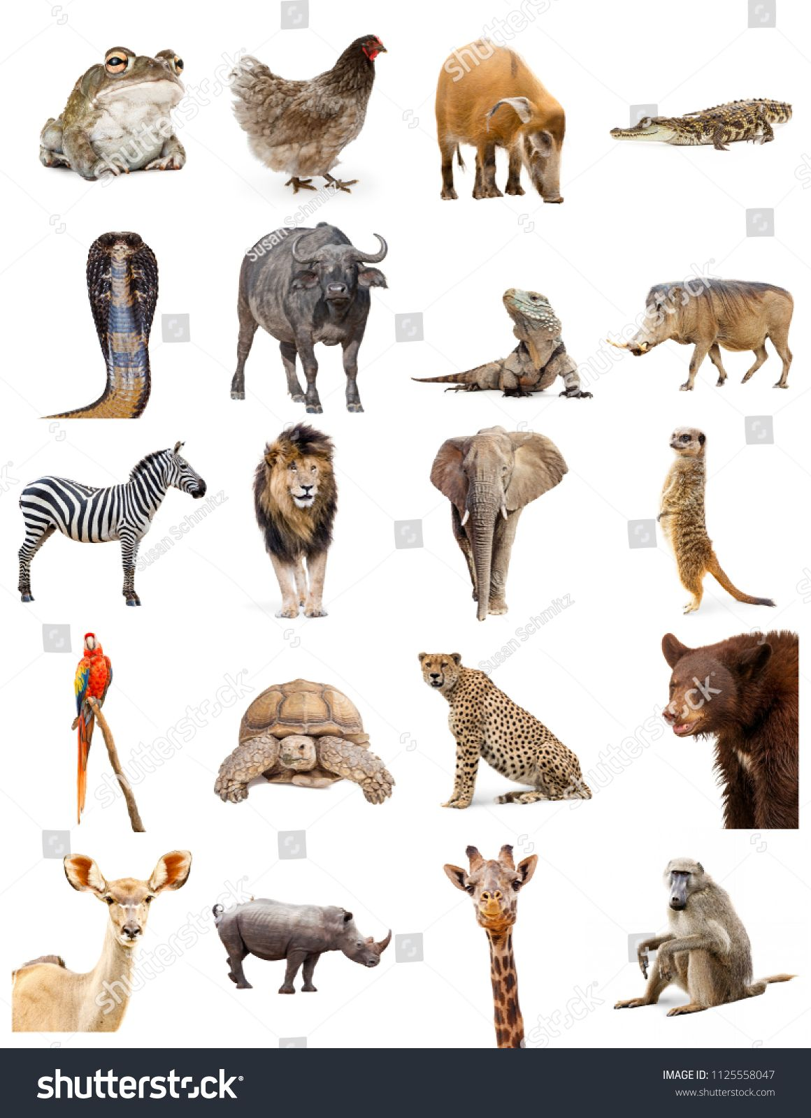 Set Of Twenty Different Zoo Animals On White Sized To Print On Letter Paper Or For Use On Websites Or Social Media Image Zoo Animals Animals Wildlife Animals