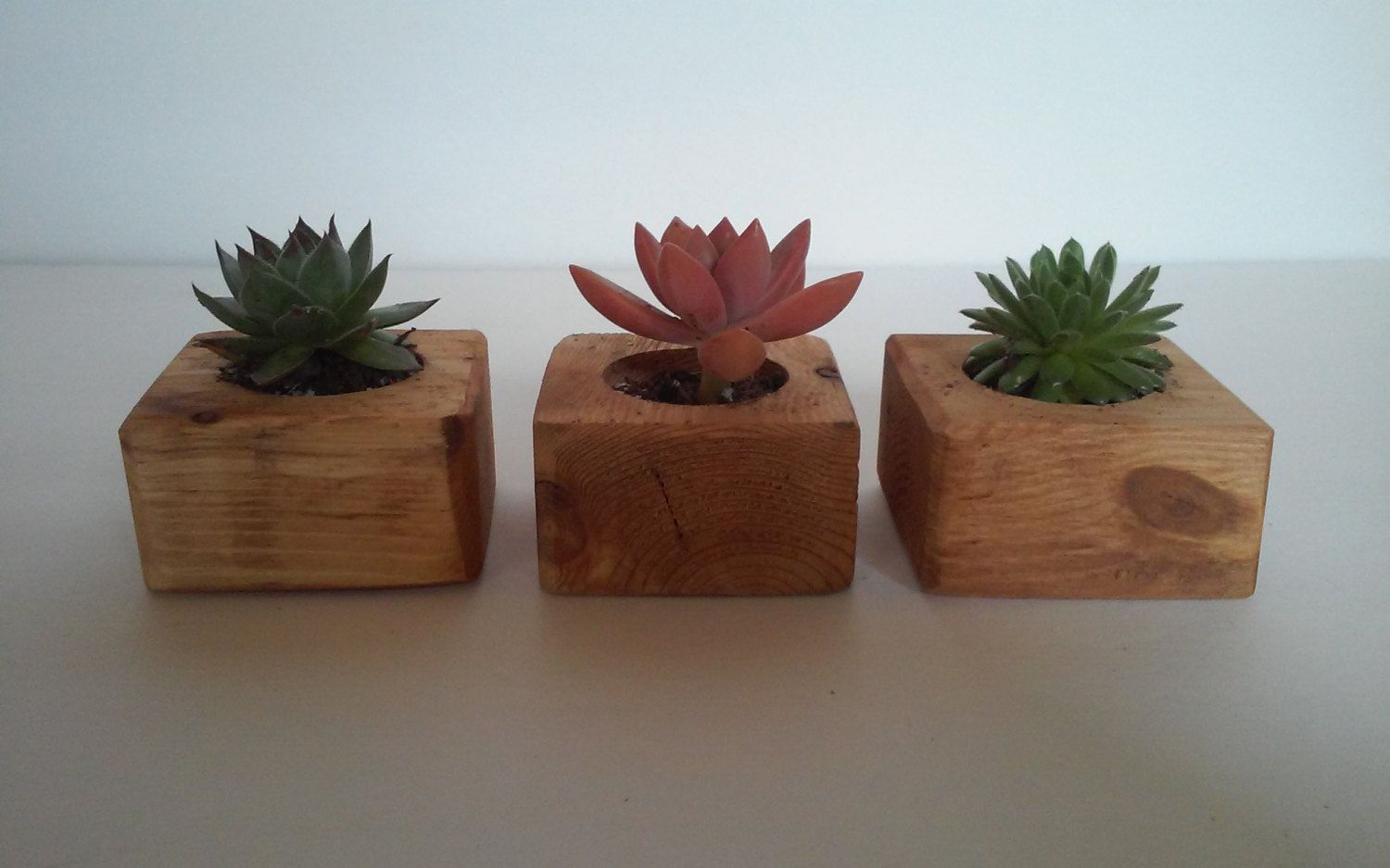 Handmade succulent wedding favors by Theplantcycler on
