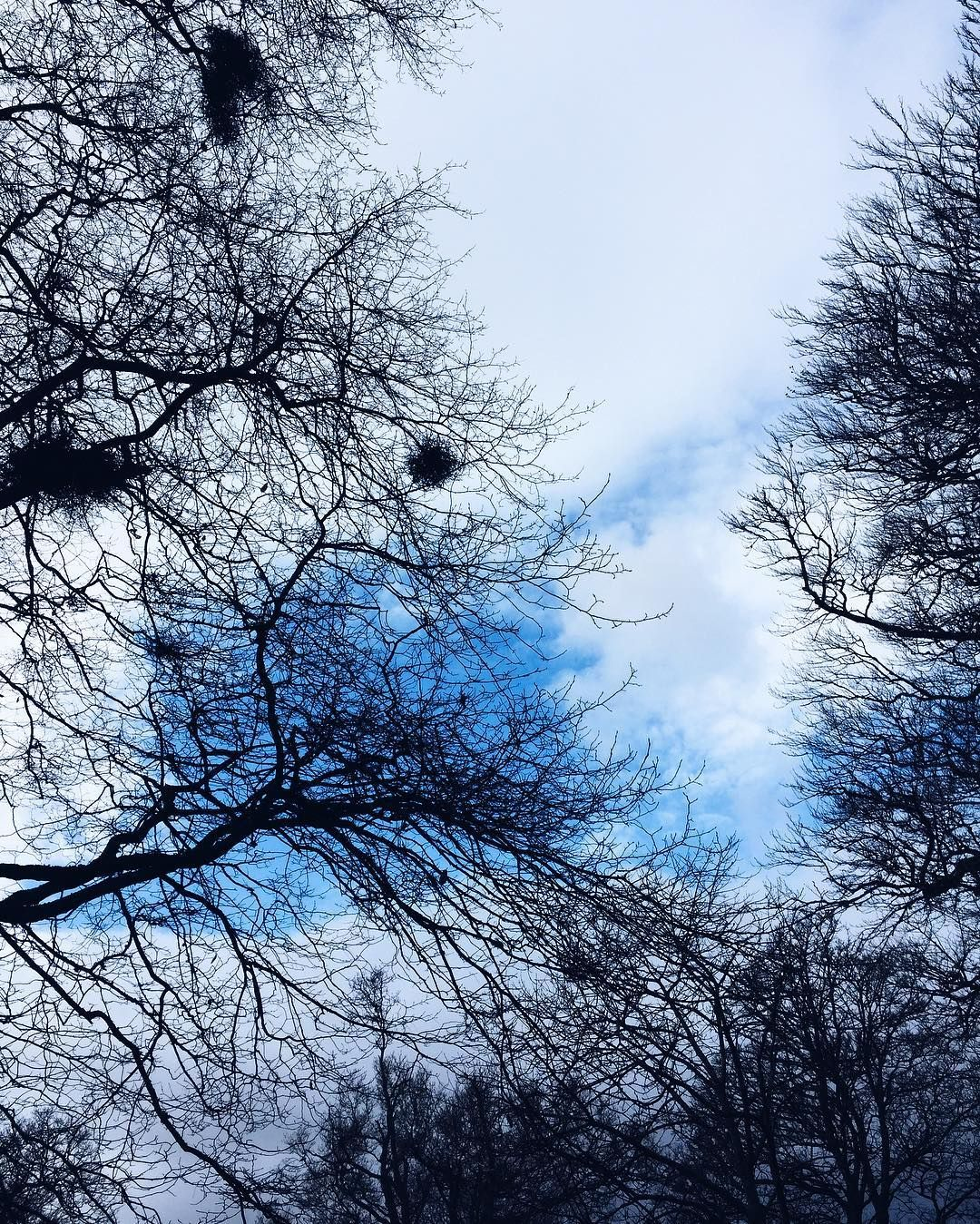 #LookUp  Such a lovely long park walk today - my nose and hands are still freezing  #ParkLife #BeautifulScotland #Balloch #Skyporn