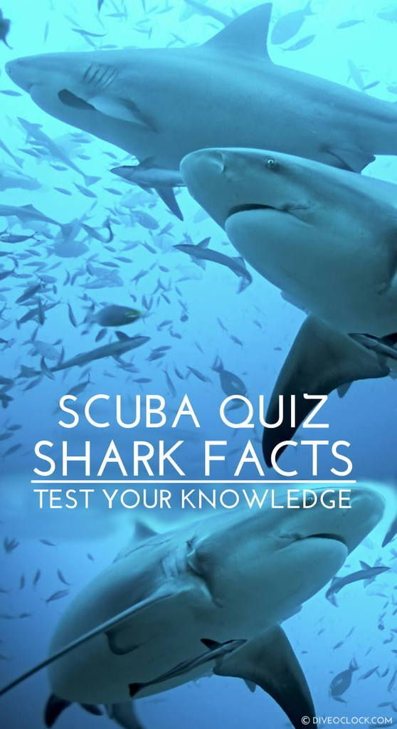 SCUBA QUIZ: What Do You Know About Sharks