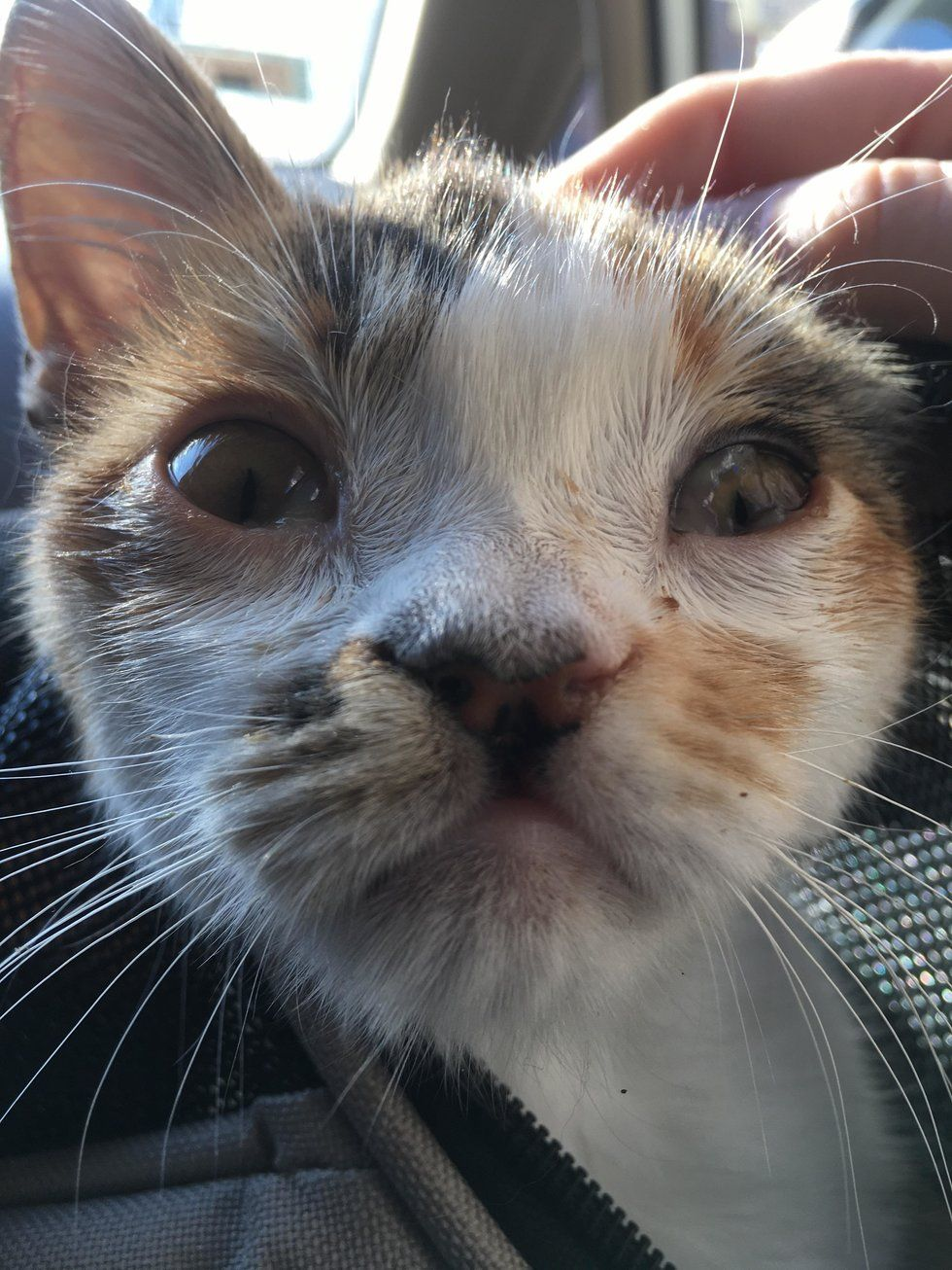Please Help Stray Animals A Stray Calico Kitten Was Found Wobbling Around The Streets Of Chicago All Alone When She Was Given Lo Calico Kitten Kitten Animals