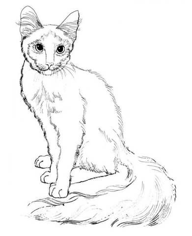 Sitting Cat Coloring Page From Cats Category Select 25565 Printable Crafts Of Cartoons