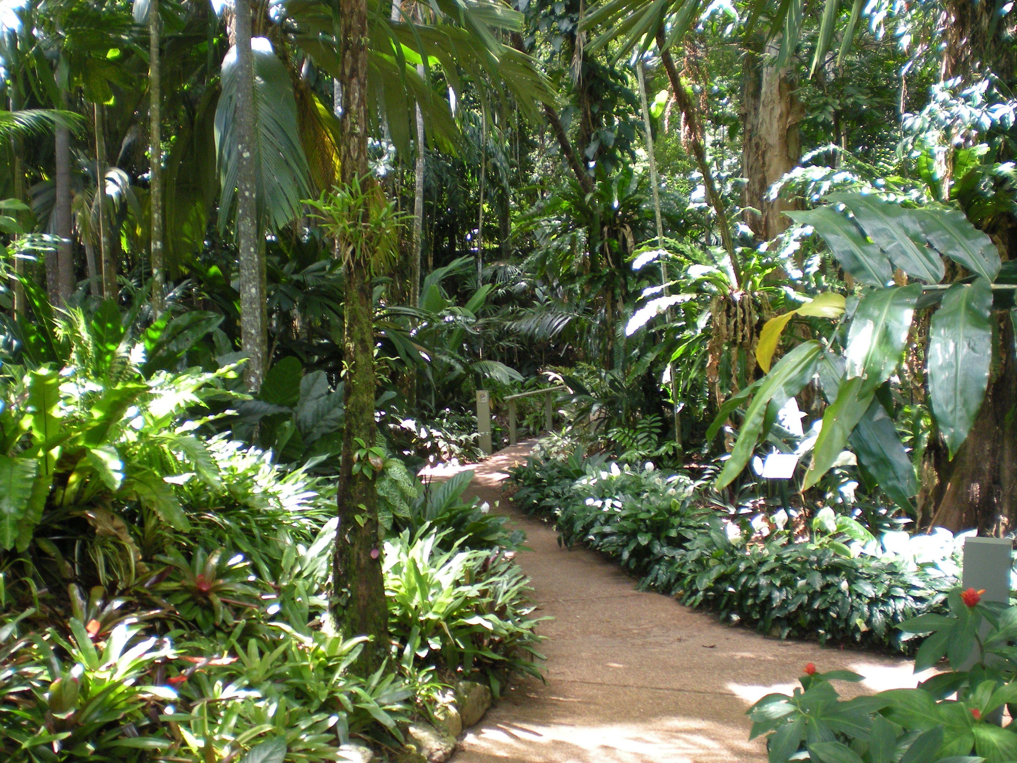 CAIRNS Botanical Gardens North Queensland Australia  Tropical