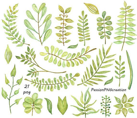 Leaf watercolor. Big set leaves clipart