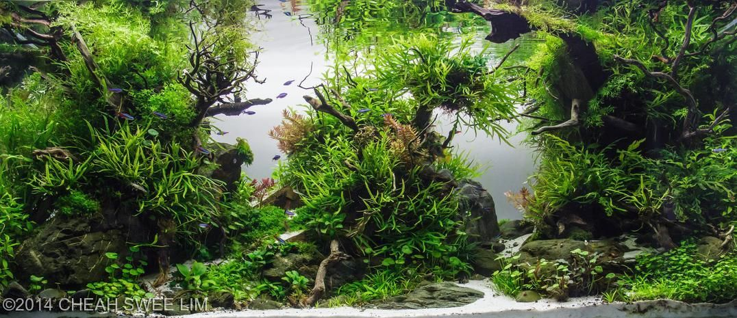 These Aquascapes Will Blow Your Mind. These Are The Best Of 2014 And Well  Deserved