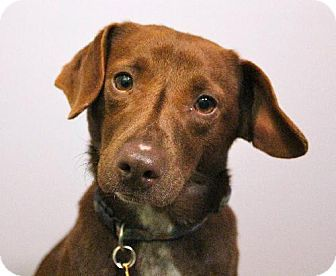 Edina Mn Dachshund Beagle Mix Meet Matilda D140086 A Dog For