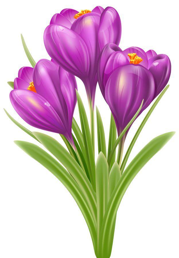 Astronomiczna Wiosna Ozdoby Wiosenne Kwiaty 2 Marzec Ozdoby Swieta I Pory Roku Wiosna Flower Painting Flower Art Painting Flower Drawing