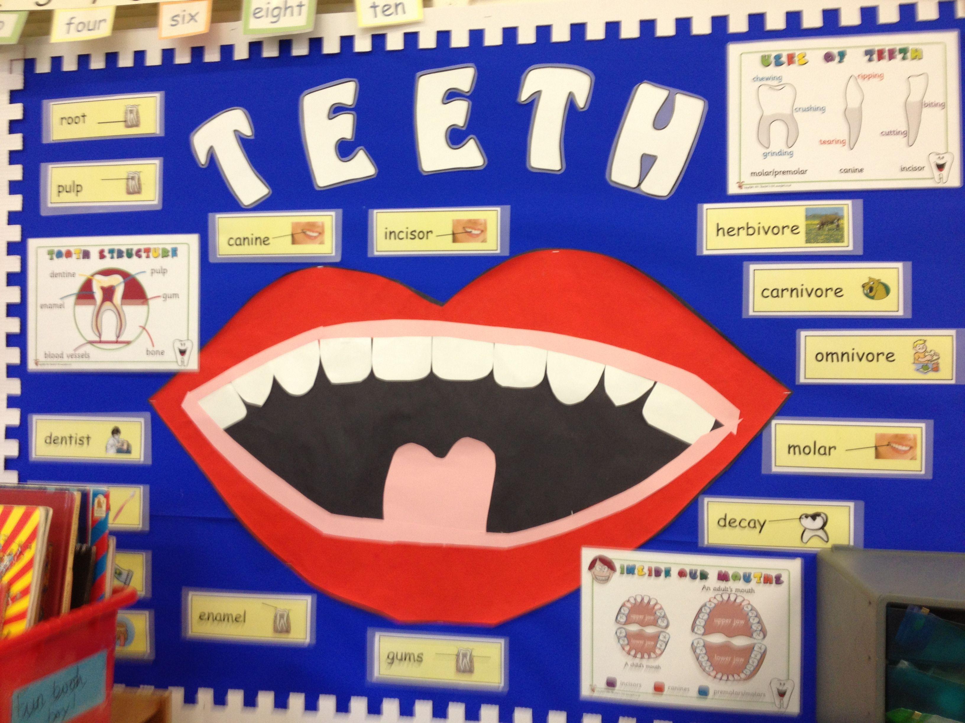 My Year 3 Teeth Display Board