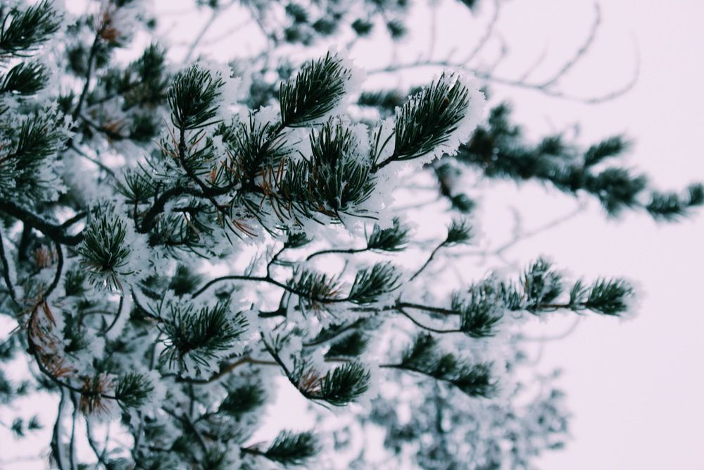 frost and other good things // new post on seek + scout