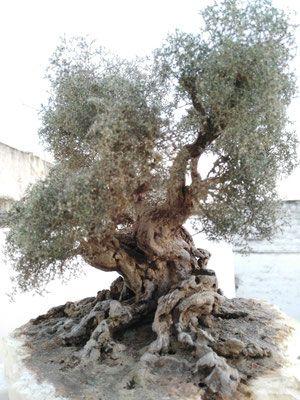 hacer un árbol para la cuna