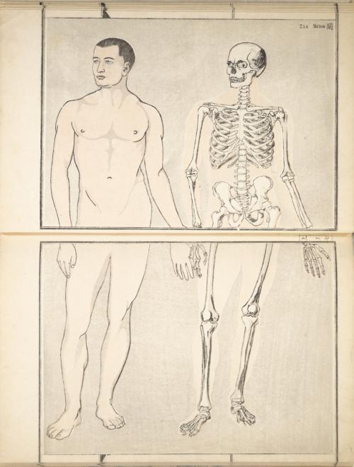 Musée du CFDRM, la bibliothèque du massage