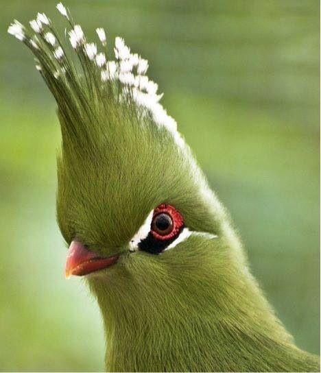 25++ Mohawk bird information