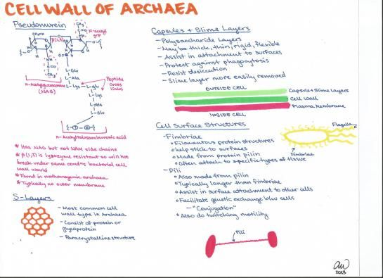 Microbiology study guides microbiology cell wall of archea fandeluxe Images