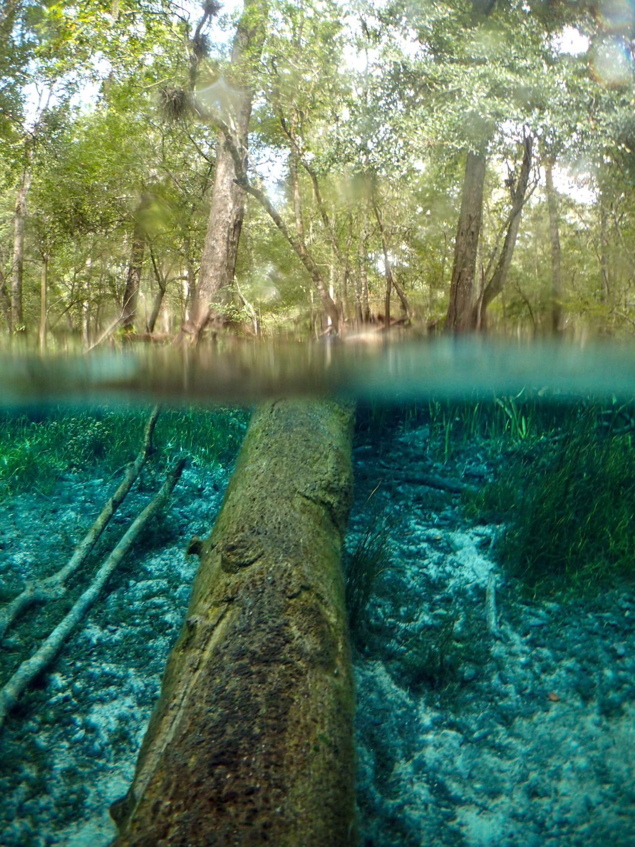 Santa Fe River   Florida Hikes!