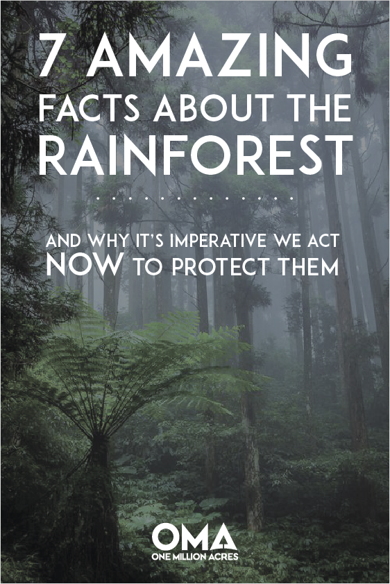 7 Amazing Facts About The Rainforest You Need To Know