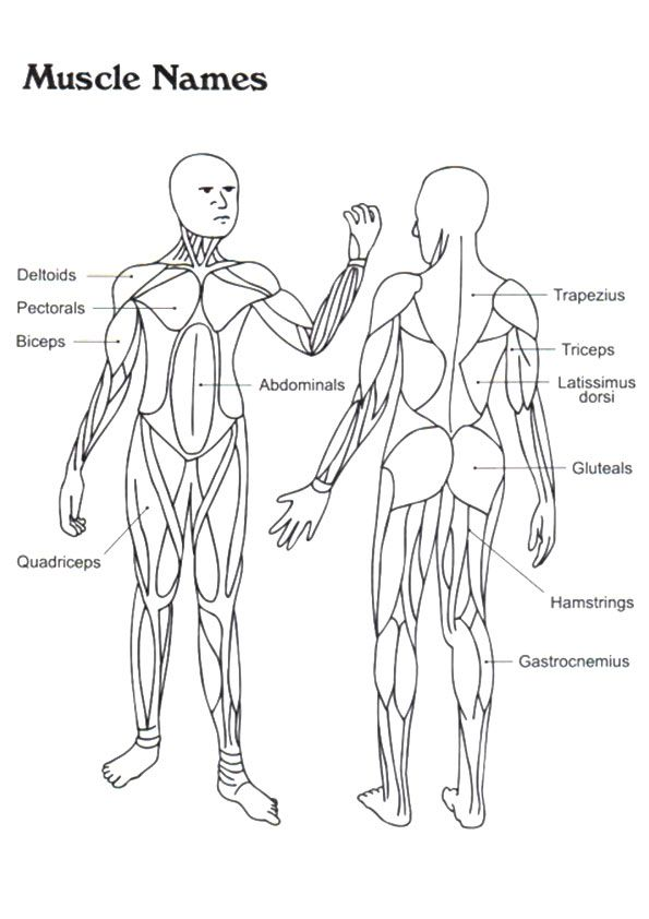 Click Share This Story On Facebook Muscle Anatomy Anatomy Coloring Book Human Body Systems