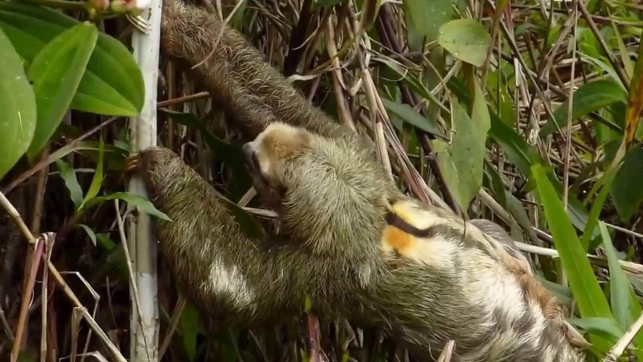 Binatang Ini Masih Ada Harus Segera Dilestarikan Aneh Ajaib