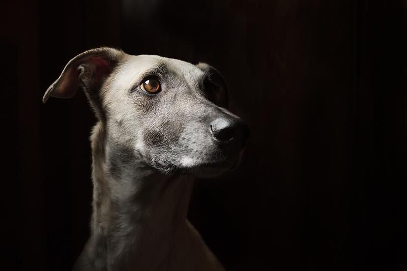 PHOTO BY ELKE VOGELSANG........PARTAGE OF WIESELBLITZ