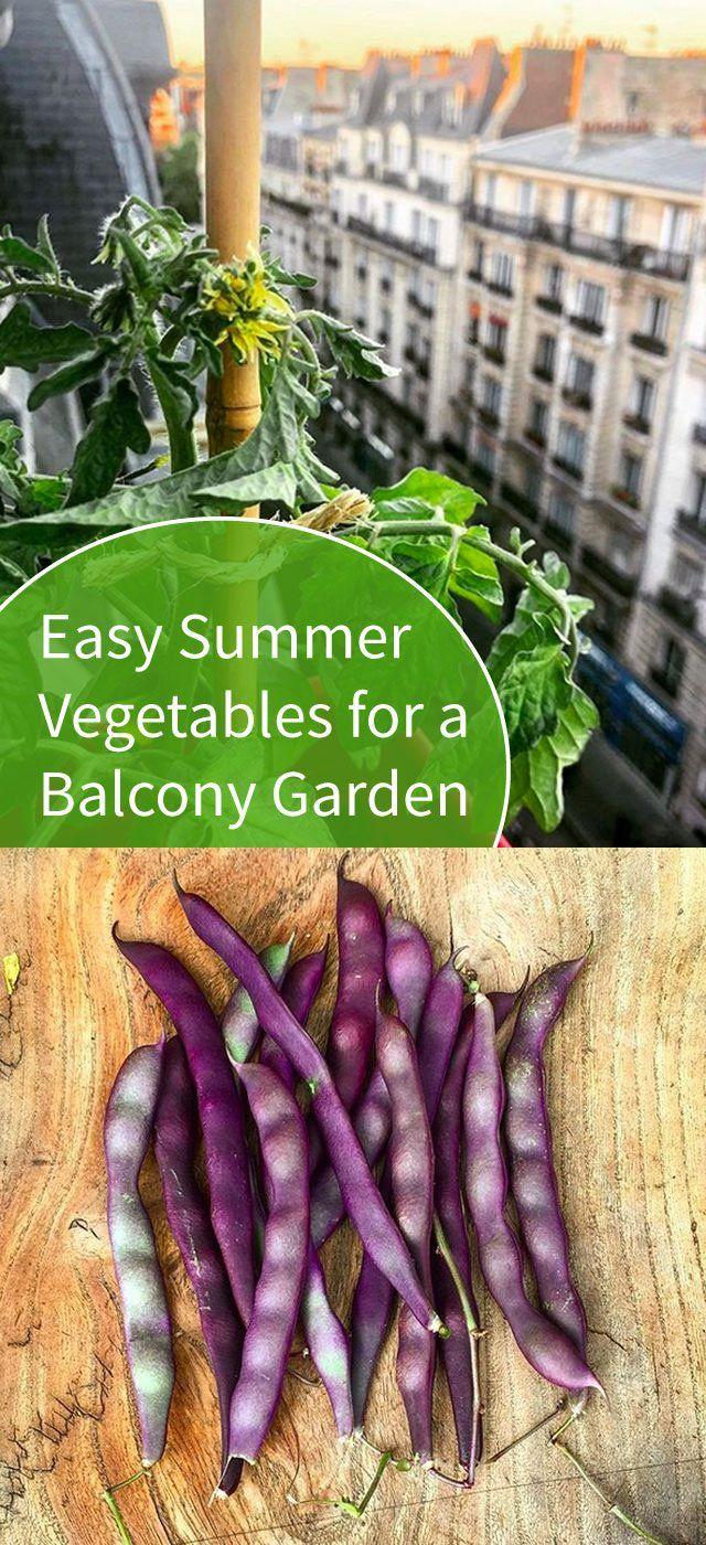Photo of Möchten Sie einen Balkongarten anlegen? Beginnen Sie mit diesen einfachen Sommergemüsen | Hunker