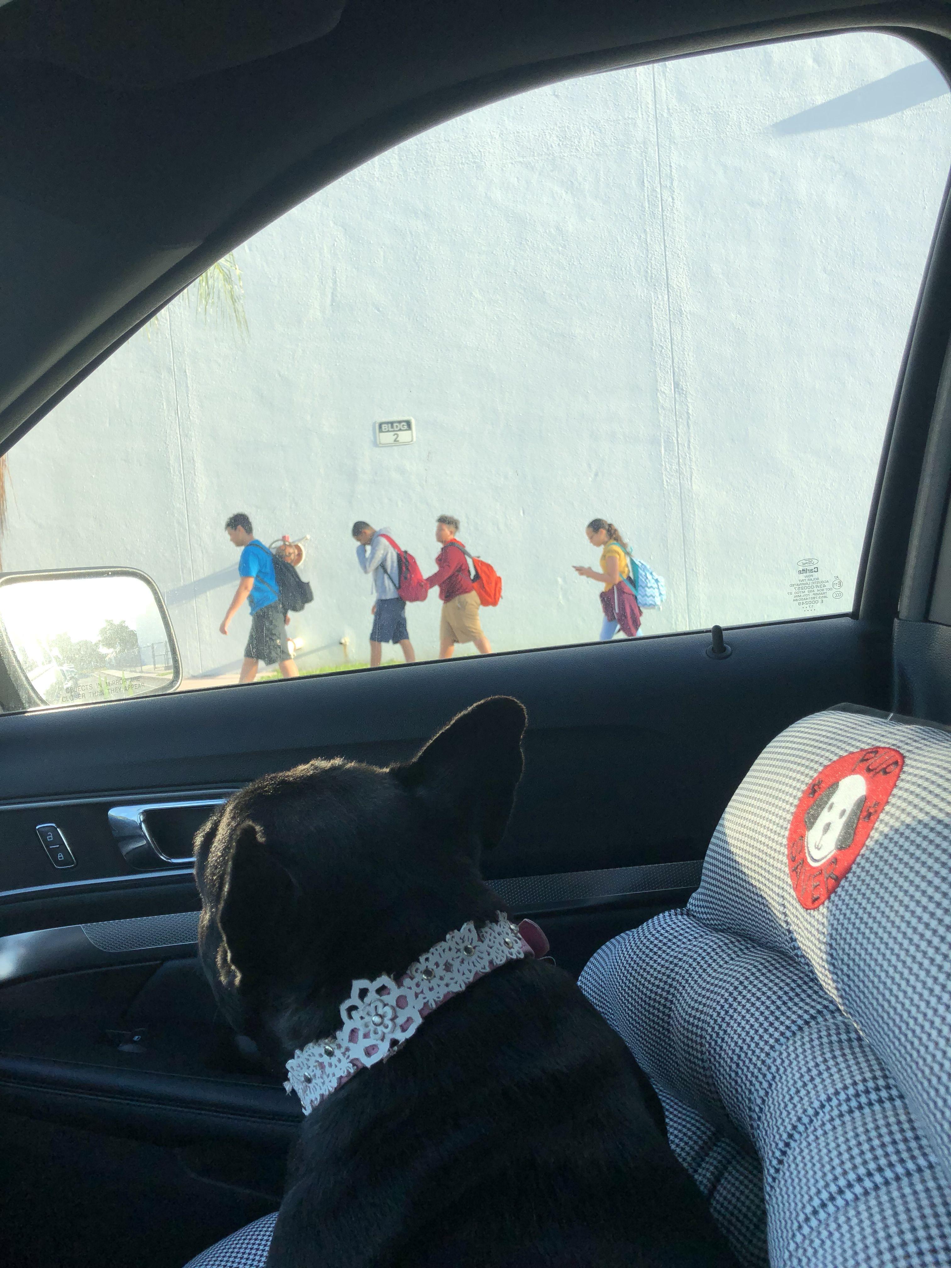 Watching my lil humans off to school 💗🐶 danshislagertha