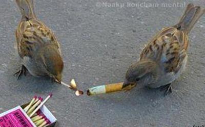 Peer pressure..
