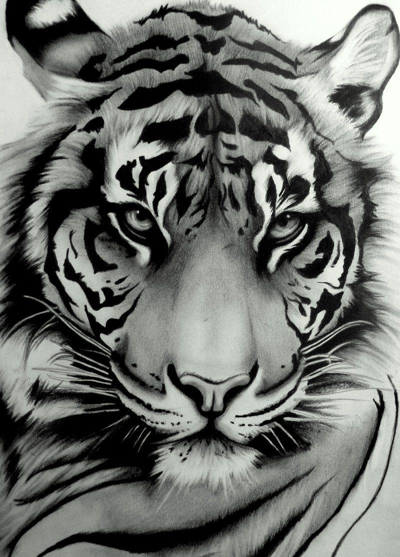 My Tattoo Sumatran Tiger By Artistelllie Tiger Tattoo Animal Drawings Tiger Art