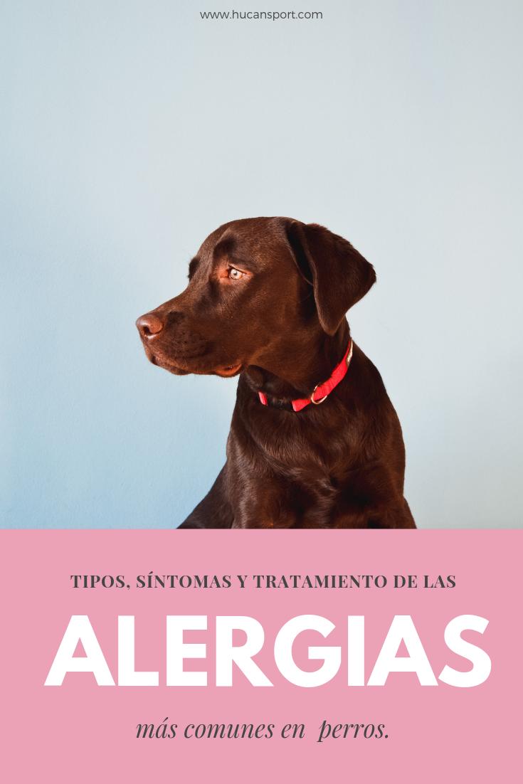 Alergias En Perros Descubre Los Tipos De Alergia Mas Comunes Sus