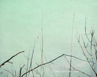 Mint Green Walls swamp reeds photograph nature abstract pale mint green wall art