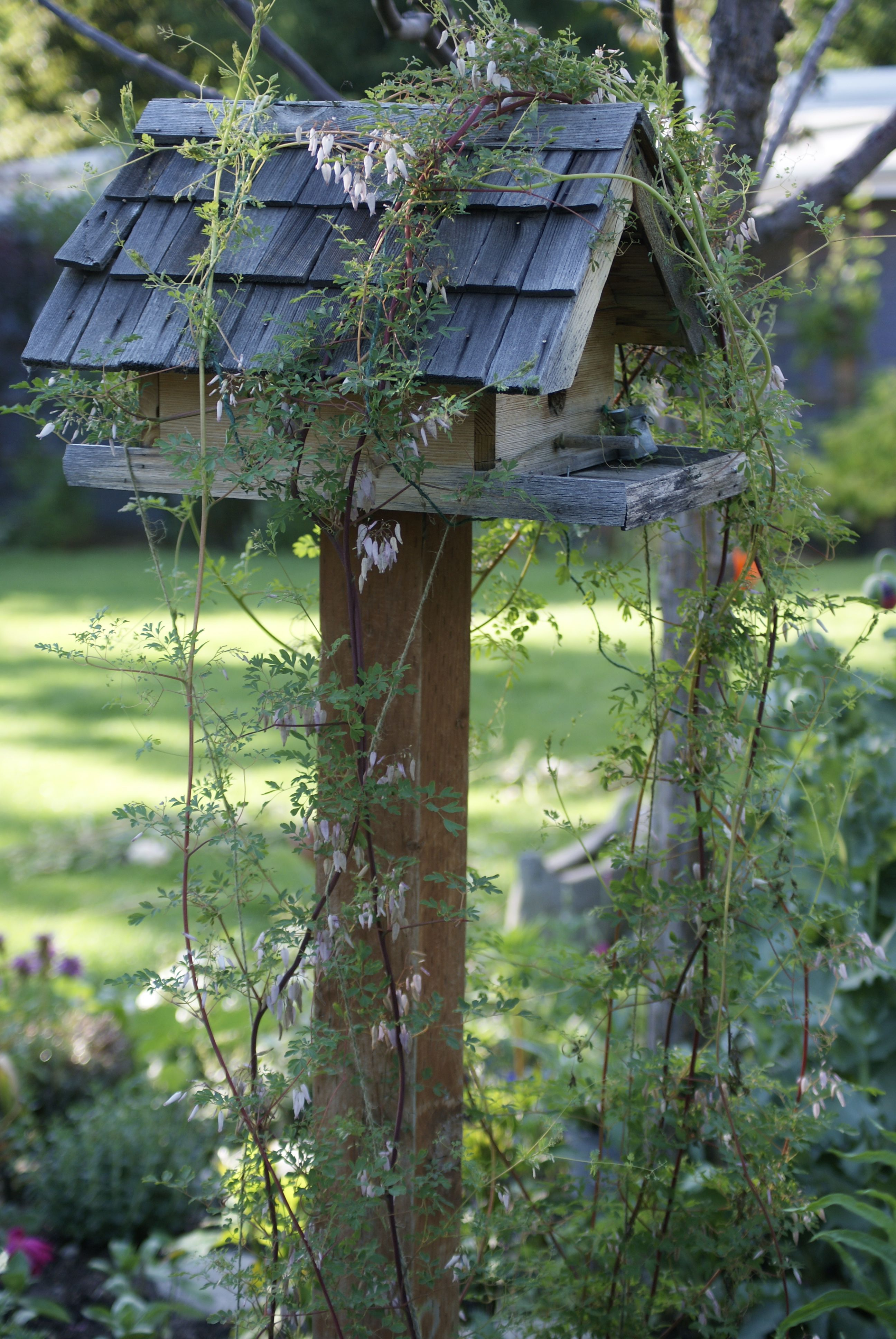 Looks like an Ivy birdhouse for the chirping buddies. I love listening to their song in the early mornings... sipping tea. It is, by far, my favorite time of the day. When the day is just awakening with exciting possibilities. Everything in that moment is so peaceful.
