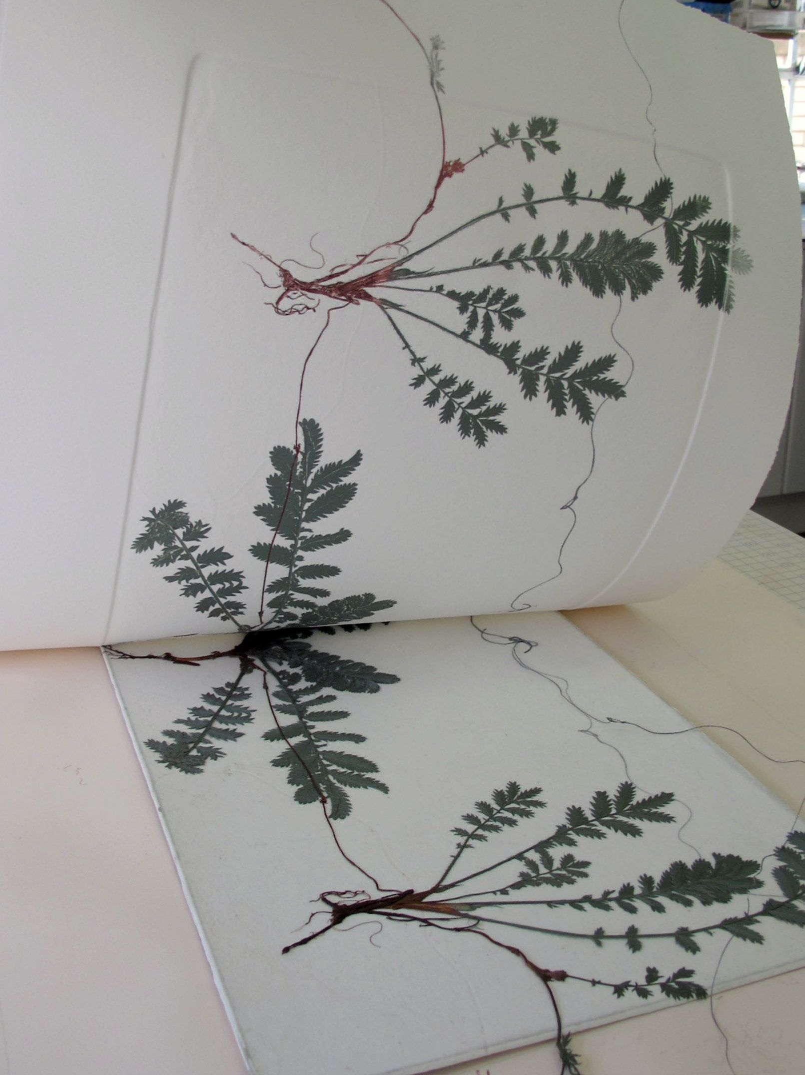 Urban Bees: Working Together, Lynn Bailey Silverweed, for [inked, nature monoprinting w/ collagraph, and chine collé...]