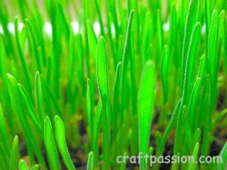 Sowing The Seed Of Health – Wheat Grass   Free Pattern & Tutorial at CraftPassion.com