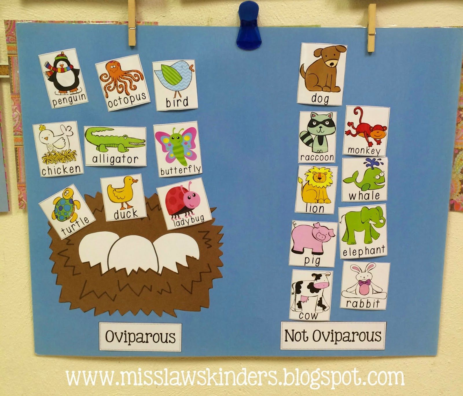 Oviparous Animals Sort