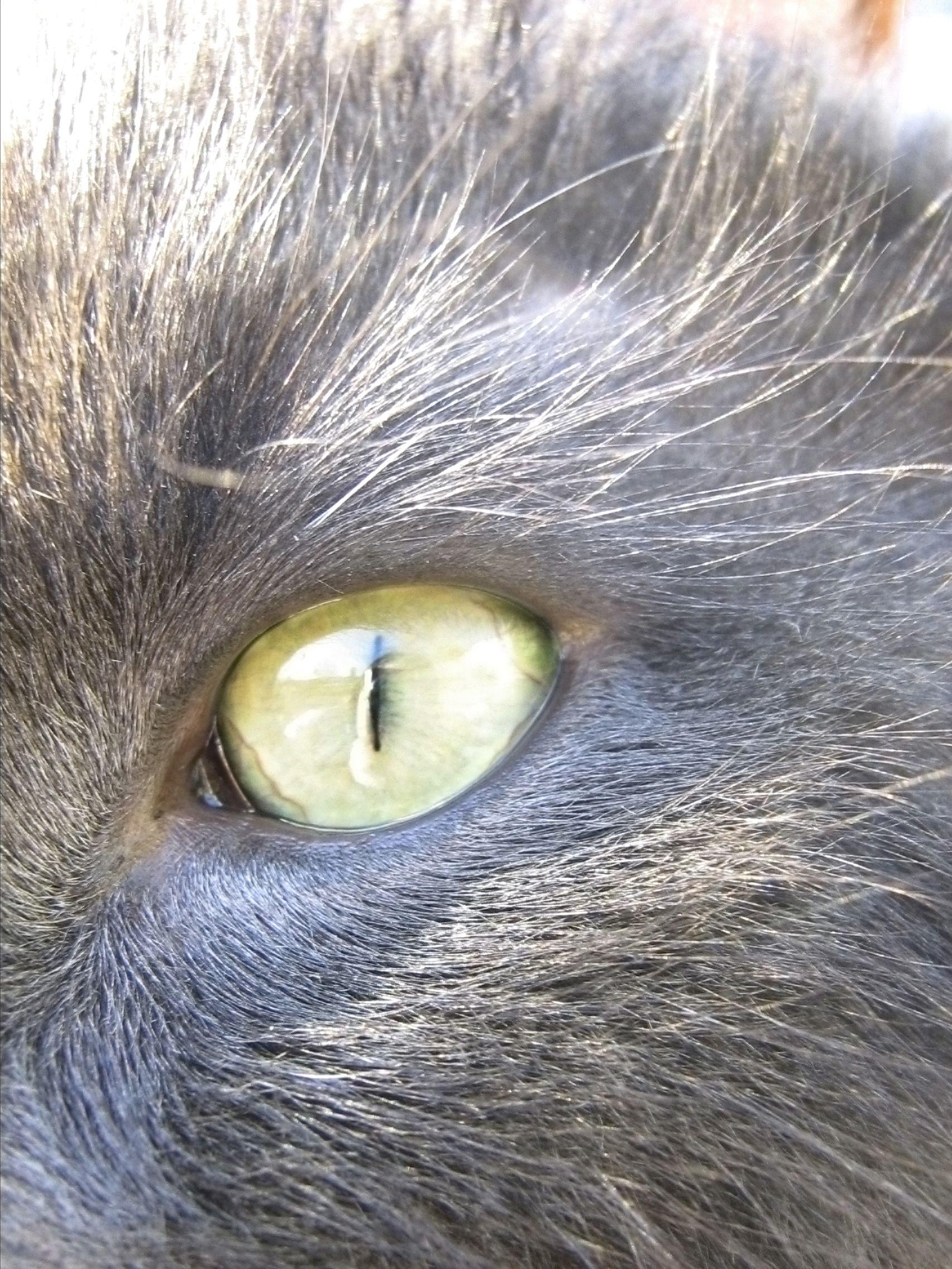 cat eye in bright sunlight | Demonic anatomy | Pinterest | Anatomy ...