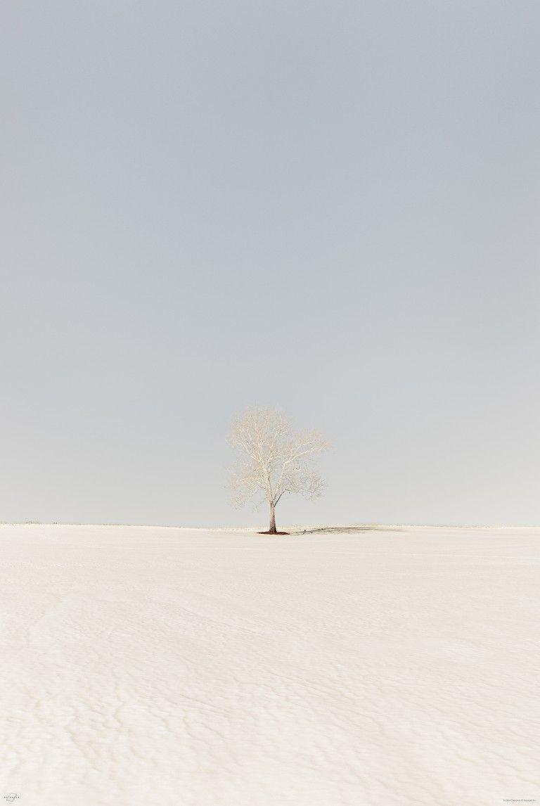 Be Paper – Honestly WTF   #landscape #naturephotography #nature #natuur #minimalism #minimal #tree #perspective #bluesky #landscapephotography #fotografie #landschapsfotografie #landschap