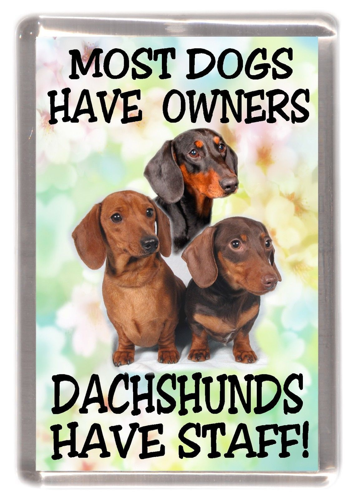 3 1 Gbp Dachshund Smooth Haired Dog Fridge Magnet Most Dogs