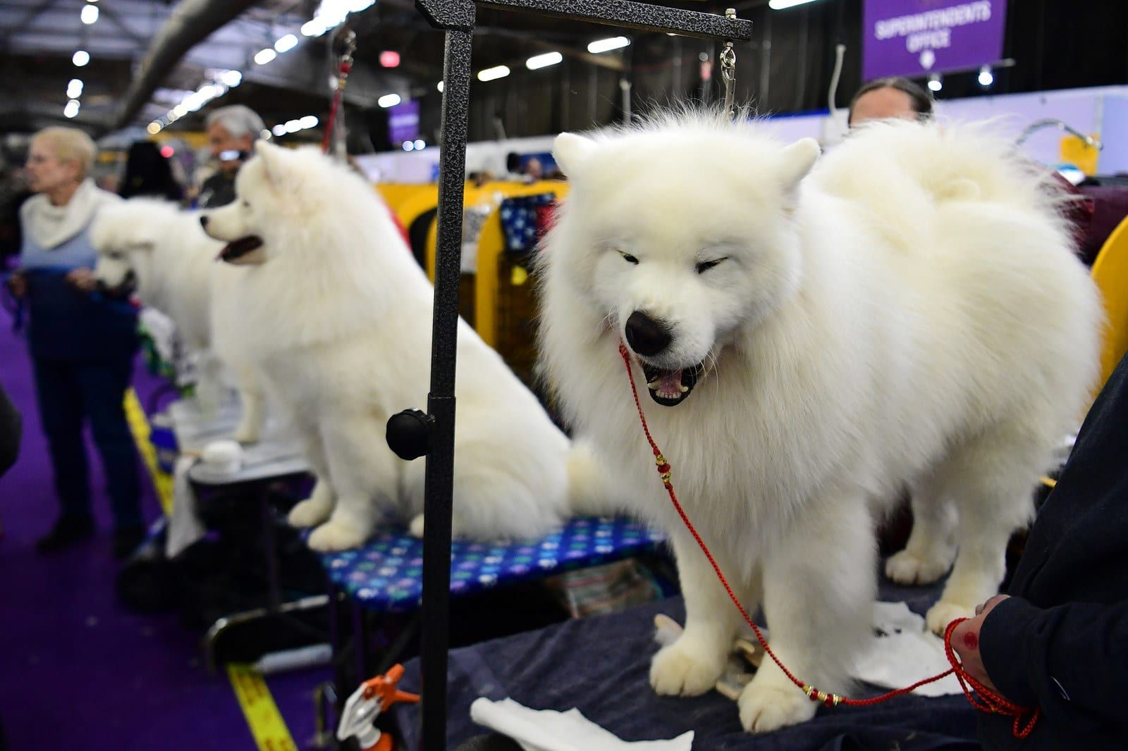 These Dogs At The Westminster Dog Show Are The Self Care Inspo We