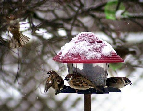 Pihabongauksessa tarkkaillaan lintuja tunnin ajan.