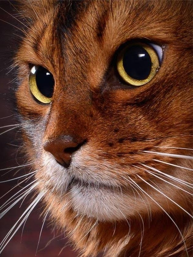 www.majaempfiehlt.de,  #animalsbeautiful #animalscutest #animalsdibujos #animalsdrawings #animalsfunny #animalsphotography #animalstiernos #animalswild #animalsyoudidn'tknowexisted #babyanimals #wwwmajaempfiehltde