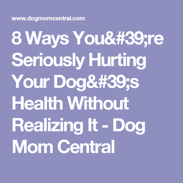 8 Ways You're Seriously Hurting Your Dog's Health Without Realizing It - Dog Mom Central