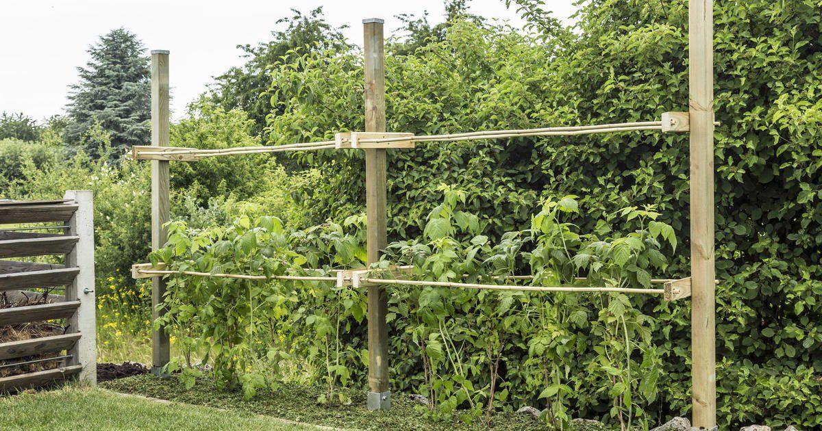Photo of Construye tú mismo ayuda para escalar las frambuesas