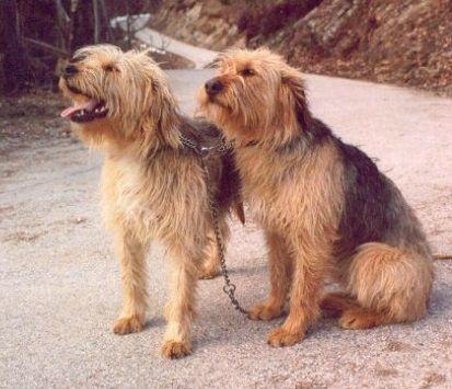 Coarse breeders