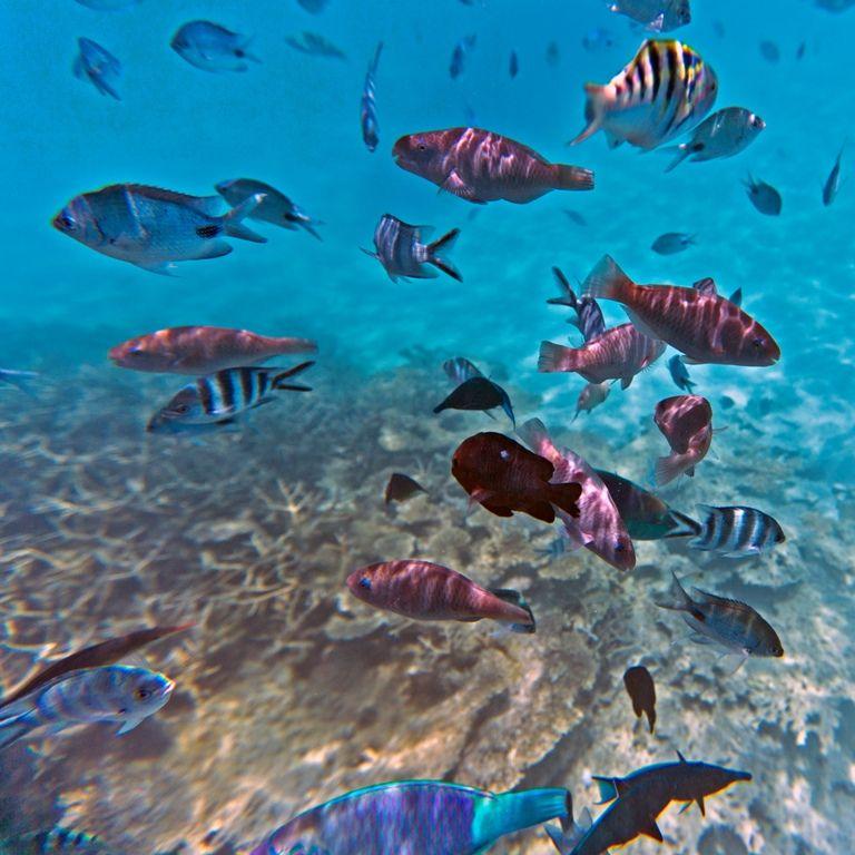 Ile Maurice Snorkeling at Blue Bay | Mauritius | Pinterest | Mauritius